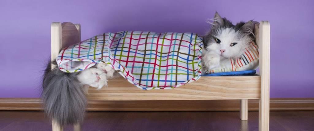 Cat sleeping in her Bed
